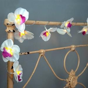 Lichterkette Orchideen